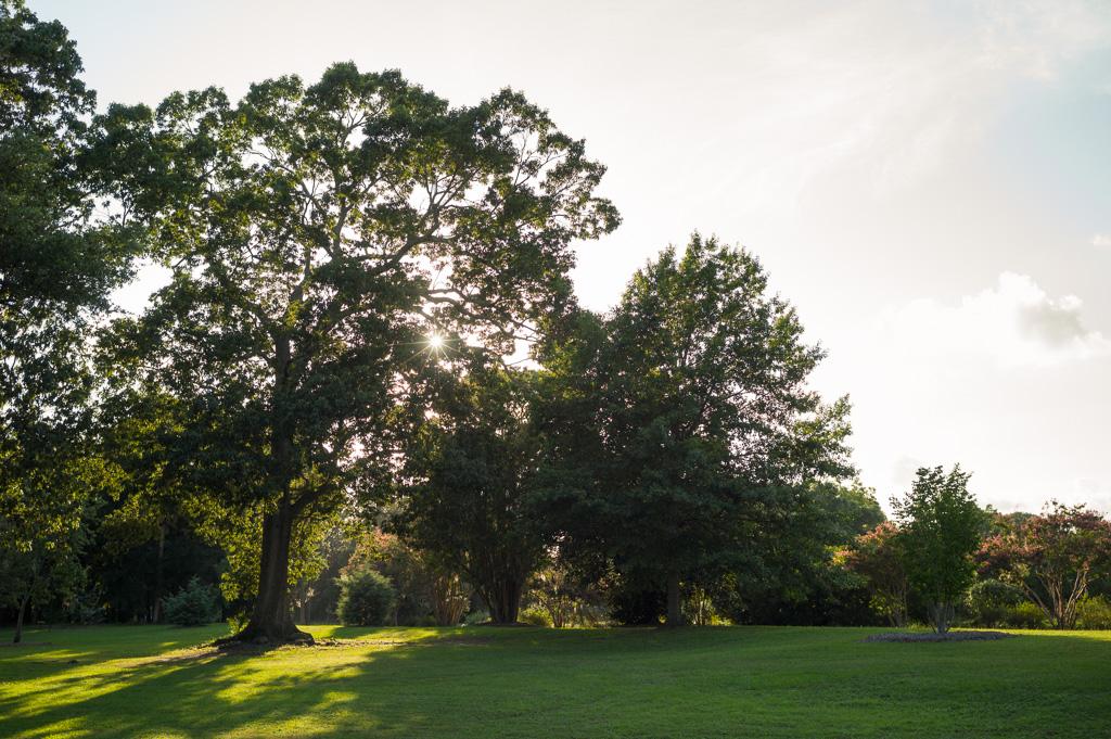 charleston-south-carolina-hampton-park-donnan-photo-00001