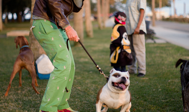 Dogs of Charleston