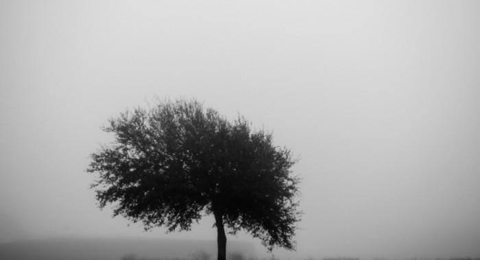 The fog on Sullivan's Island