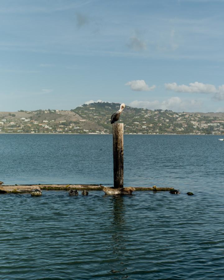 sailing-sausalito-bay-san-fran-california-engagment-angela-trevor-00006