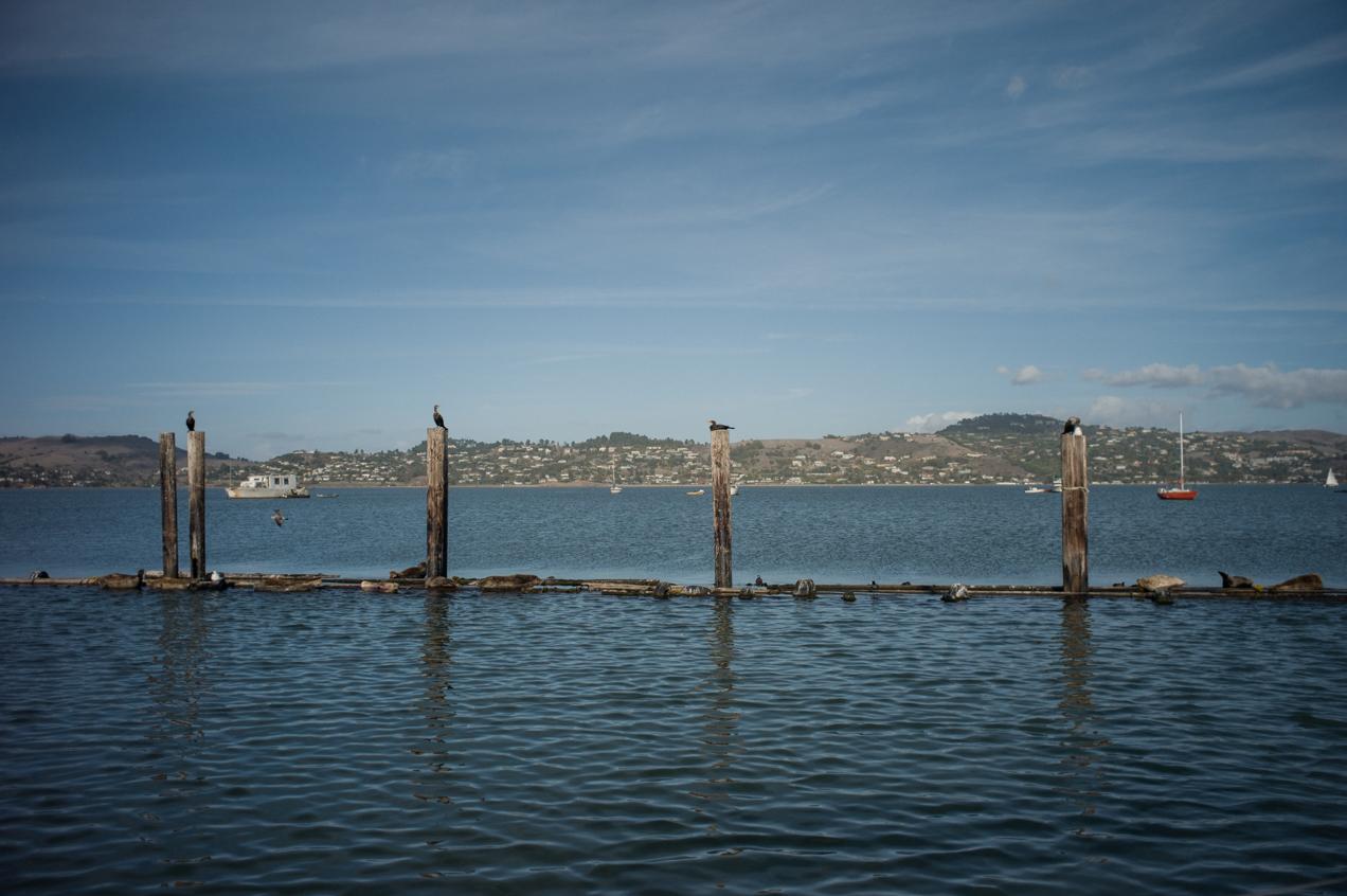 sailing-sausalito-bay-san-fran-california-engagment-angela-trevor-00007