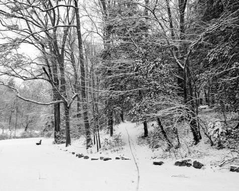 Snow in Greenville!