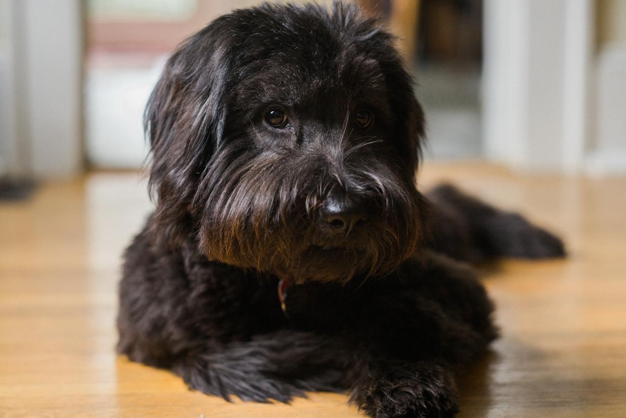 Meet Lucy
